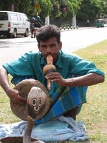 SriLankanSnakeCharmer